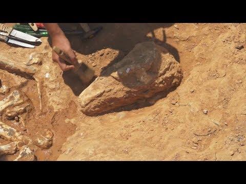 Παλαιοντολογική ανασκαφή στο Πικέρμι: Ένα αφρικανικό τοπίο 7.200.000 ετών