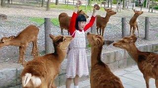 【奈良県】押し寄せる鹿たちにお手上げの女の子