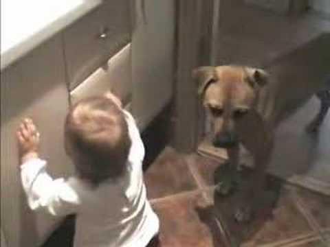 Dog and Baby-girl – Funny