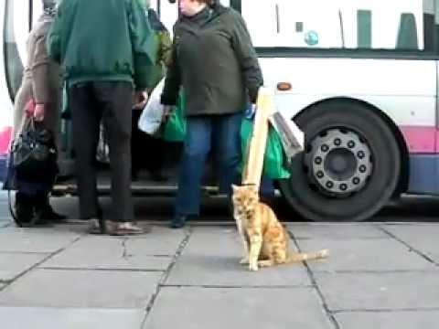 Gato que passeia de autocarro