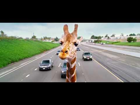 The Hangover - Part III (2013) Giraffe Scene