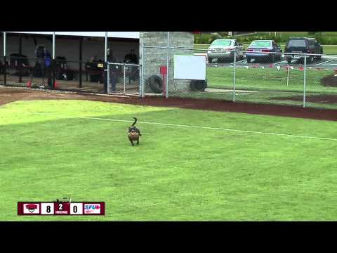 Dog Steals Show at WOU Softball