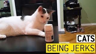 animale pisici ticaloase