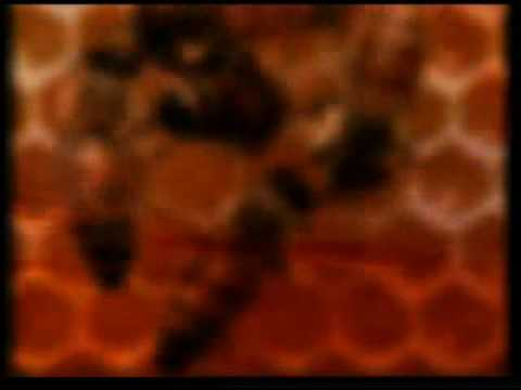 apikultura - tajna pcela www.pcelarstvo-nahl.com.