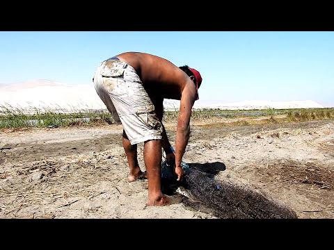 Tremenda Pesca!!... esas tilapias son Grandes