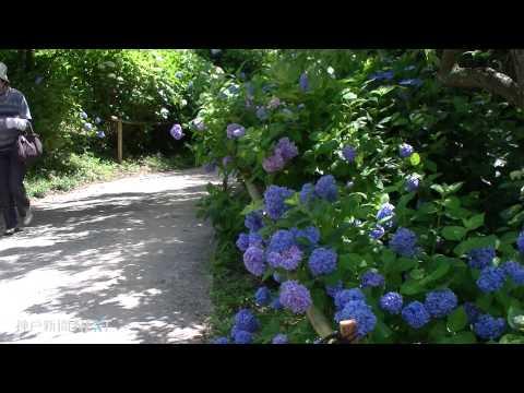 絶景と花々 山頂の楽園 あわじ花の歳時記園