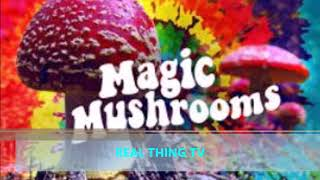Video First Pot, Now Mushrooms Drug Could Be Legal In CA MP3, 3GP, MP4, WEBM, AVI, FLV November 2017