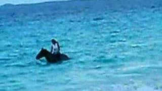 """SWIMMING WITH MY HORSE """"BOB MARLEY"""" IN ANGUILLA."""