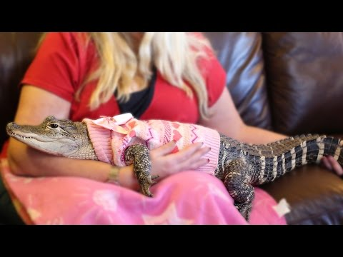 1 • E2___  _    The World's Most Pampered Alligator: BEAST BUDDIES