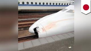 Video Bullet train accident: Parts found in nose of train TomoNews MP3, 3GP, MP4, WEBM, AVI, FLV Januari 2019
