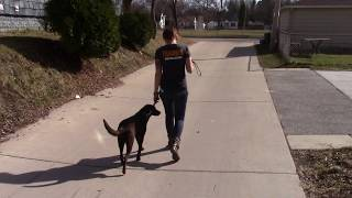 Training with Zoe in Milwaukee – Suburban K9
