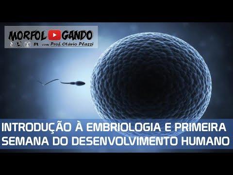 embriologia - Vïdeo-aula completa sobre a formação dos gametas masculino e feminino e anatomia dos dos aparlehos genitais, fecundação e primeira semana do desenvolvimento ...
