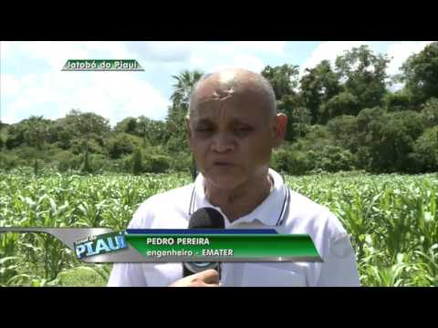 Festa da Melancia de Jatobá do Piauí expõe novidades da fruta