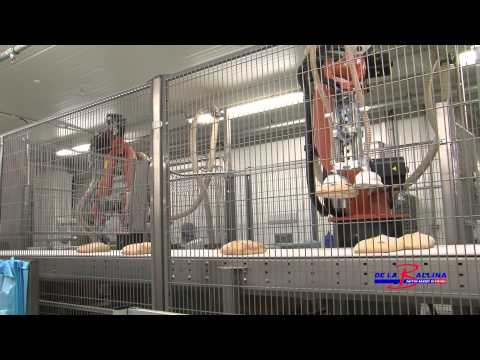 Robotised Box Packing for Bread | Pattynn