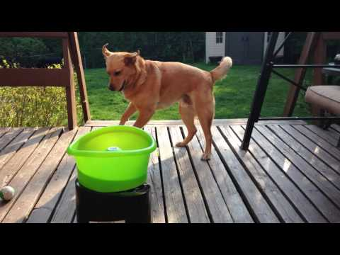 DOG LOVES AUTOMATIC BALL THROWER