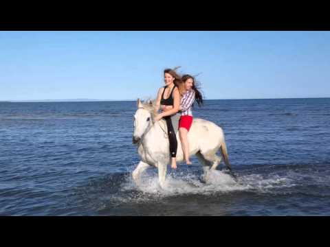 Thrills and Spills - Horse Riding at the Beach.