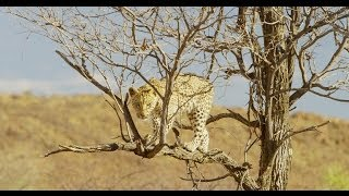 Namibia is home to the greatest wildlife recovery story ever told. Since its birth just over 2 decades ago, the country of Namibia has shown the world how to...