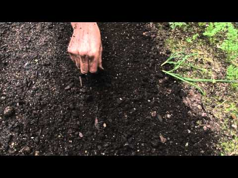 Video How to sow a seed directly into garden download in MP3, 3GP, MP4, WEBM, AVI, FLV January 2017