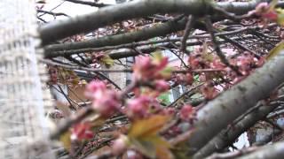 #590 Wie pflanze ich einen Grossbaum Teil 1v11 - Pflanzvorbereitung