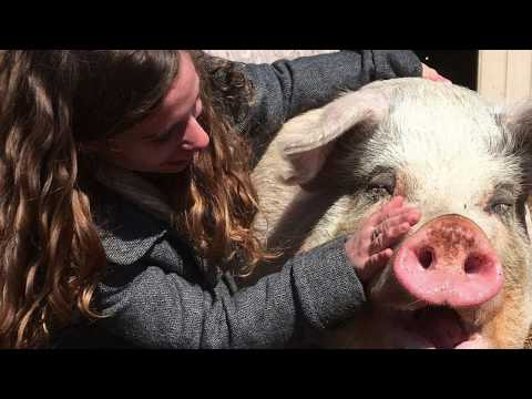 16 Year Old Girl Saved This Pig's Life 3 Years Ago. Their Reunion Will Touch Your Hearts