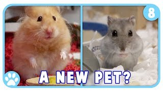 IKEA Hamster Products + Are We Getting New Pets? || Vlogstice Day 8 by ErinsAnimals