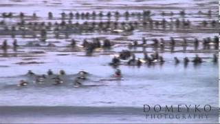 Jay Moriarity Quote on Life - Video