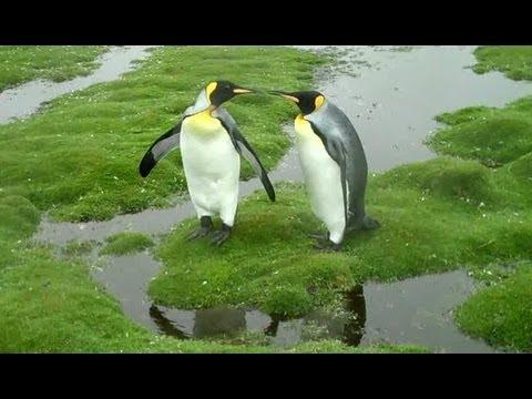 Penguin Dilemma