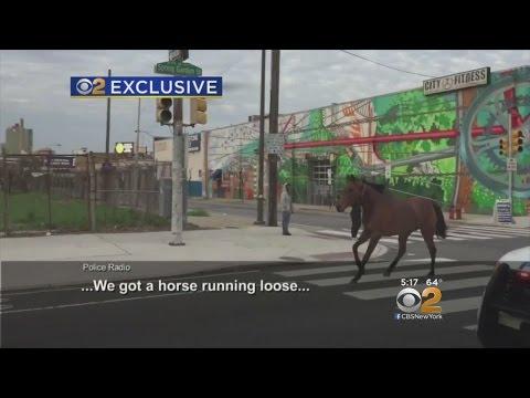 Horse Runs Through Streets Of Philadelphia