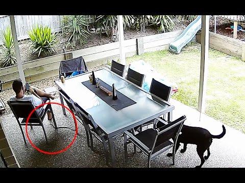 狗狗看到一條蛇接近正在玩手機的主人,牠接下來下意識的舉動讓網友讃爆了!