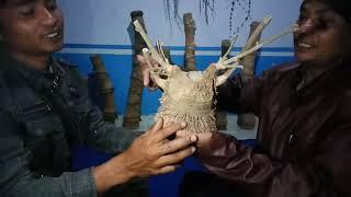 Video Khasiat Bambu - Bambu Bertuah MP3, 3GP, MP4, WEBM, AVI, FLV Desember 2018