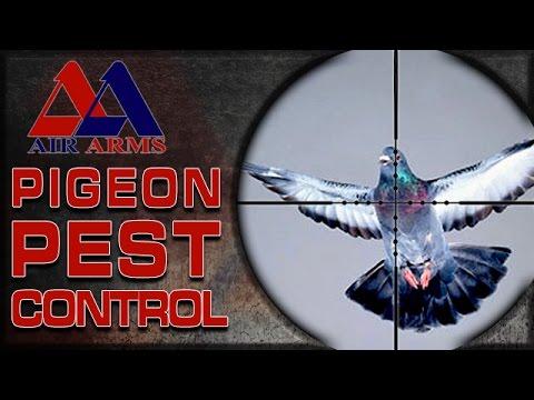 Airgun Hunting – Problem Pigeon Pest Control!