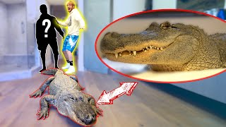 Video LIVE ALLIGATOR PRANK ON NEW ROOMMATE! MP3, 3GP, MP4, WEBM, AVI, FLV November 2018
