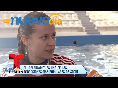 """Notícias dos famosos - """"El Delfinario"""", la atracción más populares de Sochi  Un Nuevo Día  Telemundo"""