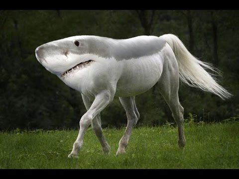 10 Most Shocking Animal Mutations