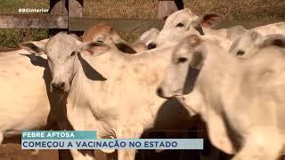 Vacinação contra febre aftosa tem início em todo o estado