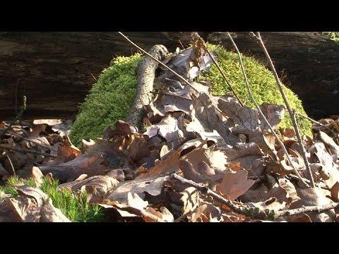 Z lesů mizí vzácné rostliny