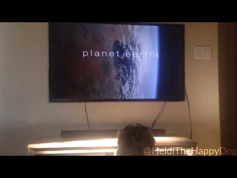 Planet Earth on Heidi-koiran lemppariohjelma