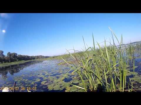 ловля на морду на реке