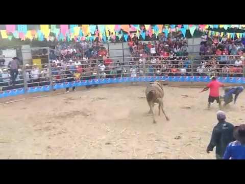 Club de Monta Universidad Nacional De Agricultura en San Antonio Intibuca RODEO 100% Hondureño