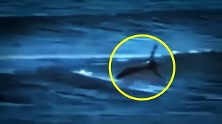 Video 5 Mermaids Caught On Camera & Spotted In Real Life! #2 MP3, 3GP, MP4, WEBM, AVI, FLV Februari 2019