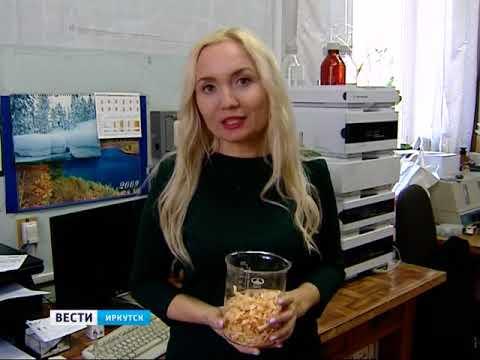 Линию попроизводству уникального лекарства излиственницы запустили учёные ИрИХСО РАН вИркутске