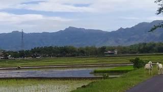Video Suasana Kampong JIRAYUT daa4, seperti ini indah, asri, damai dengan udara segar MP3, 3GP, MP4, WEBM, AVI, FLV Januari 2019