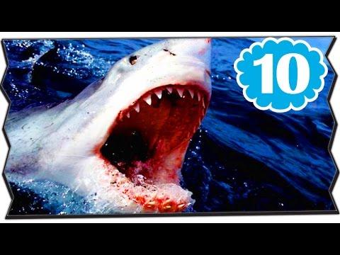 10 อันดับ สัตว์ ที่มี ขนาดใหญ่ ตลอดกาล