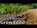 Download Lagu Using Hay and Grass as Mulch to Grow Food Mp3 Free