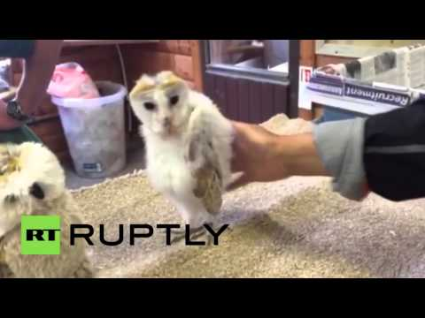 Video: Funky Owl Dances to the Rhythms of Music