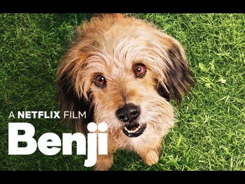 Benji - Trailer Subtitualdo en Español Latino l Netflix
