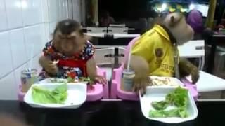 Video lucu monyet makan