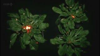 סרטון  - על תקשורת בין צמחים