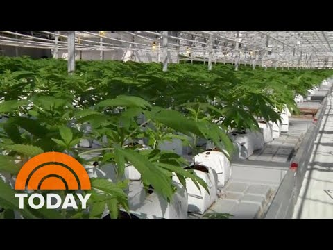 Canada Legalizes Recreational Pot: What US Tourists Should Know | TODAY