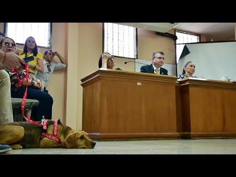 Costa Rica: Hund im Zeugenstand gegen seine Besitzerin